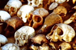 Animal skulls at the Lome fetish market